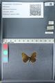 http://mczbase.mcz.harvard.edu/specimen_images/ent-lepidoptera/images/2012_02_04/IMG_111582.JPG