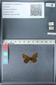 http://mczbase.mcz.harvard.edu/specimen_images/ent-lepidoptera/images/2012_02_04/IMG_111585.JPG