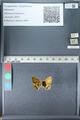 http://mczbase.mcz.harvard.edu/specimen_images/ent-lepidoptera/images/2012_02_04/IMG_111586.JPG