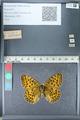 http://mczbase.mcz.harvard.edu/specimen_images/ent-lepidoptera/images/2012_02_13/IMG_112215.JPG