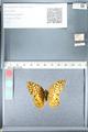 http://mczbase.mcz.harvard.edu/specimen_images/ent-lepidoptera/images/2012_02_16/IMG_112554.JPG