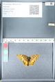 http://mczbase.mcz.harvard.edu/specimen_images/ent-lepidoptera/images/2012_02_16/IMG_112577.JPG