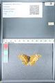 http://mczbase.mcz.harvard.edu/specimen_images/ent-lepidoptera/images/2012_02_16/IMG_112585.JPG