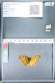 http://mczbase.mcz.harvard.edu/specimen_images/ent-lepidoptera/images/2012_02_16/IMG_112601.JPG