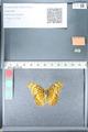 http://mczbase.mcz.harvard.edu/specimen_images/ent-lepidoptera/images/2012_02_16/IMG_112609.JPG