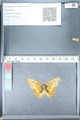 http://mczbase.mcz.harvard.edu/specimen_images/ent-lepidoptera/images/2012_02_16/IMG_112611.JPG