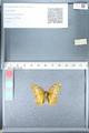 http://mczbase.mcz.harvard.edu/specimen_images/ent-lepidoptera/images/2012_02_16/IMG_112622.JPG
