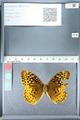 http://mczbase.mcz.harvard.edu/specimen_images/ent-lepidoptera/images/2012_02_16/IMG_112737.JPG