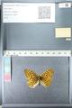 http://mczbase.mcz.harvard.edu/specimen_images/ent-lepidoptera/images/2012_02_27/IMG_112787.JPG
