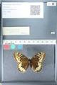http://mczbase.mcz.harvard.edu/specimen_images/ent-lepidoptera/images/2012_03_10/IMG_113676.JPG