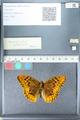 http://mczbase.mcz.harvard.edu/specimen_images/ent-lepidoptera/images/2012_03_10/IMG_113680.JPG