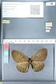 http://mczbase.mcz.harvard.edu/specimen_images/ent-lepidoptera/images/2012_03_26/IMG_114405.JPG