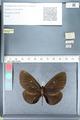 http://mczbase.mcz.harvard.edu/specimen_images/ent-lepidoptera/images/2012_03_26/IMG_114409.JPG