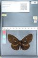 http://mczbase.mcz.harvard.edu/specimen_images/ent-lepidoptera/images/2012_03_26/IMG_114410.JPG