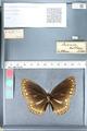 http://mczbase.mcz.harvard.edu/specimen_images/ent-lepidoptera/images/2012_03_26/IMG_114422.JPG