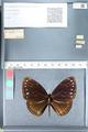 http://mczbase.mcz.harvard.edu/specimen_images/ent-lepidoptera/images/2012_03_26/IMG_114424.JPG