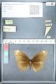 http://mczbase.mcz.harvard.edu/specimen_images/ent-lepidoptera/images/2012_03_26/IMG_114560.JPG