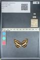 http://mczbase.mcz.harvard.edu/specimen_images/ent-lepidoptera/images/2012_04_09/IMG_115652.JPG