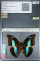 http://mczbase.mcz.harvard.edu/specimen_images/ent-lepidoptera/images/2012_04_19/IMG_116828.JPG