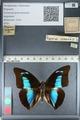 http://mczbase.mcz.harvard.edu/specimen_images/ent-lepidoptera/images/2012_04_19/IMG_116829.JPG