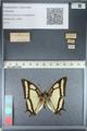 http://mczbase.mcz.harvard.edu/specimen_images/ent-lepidoptera/images/2012_04_20/IMG_116929.JPG