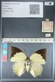 http://mczbase.mcz.harvard.edu/specimen_images/ent-lepidoptera/images/2012_04_21/IMG_116947.JPG
