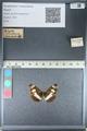 http://mczbase.mcz.harvard.edu/specimen_images/ent-lepidoptera/images/2012_04_23/IMG_117071.JPG