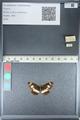 http://mczbase.mcz.harvard.edu/specimen_images/ent-lepidoptera/images/2012_04_23/IMG_117083.JPG