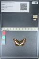http://mczbase.mcz.harvard.edu/specimen_images/ent-lepidoptera/images/2012_04_23/IMG_117094.JPG