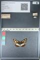 http://mczbase.mcz.harvard.edu/specimen_images/ent-lepidoptera/images/2012_04_23/IMG_117099.JPG