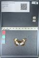 http://mczbase.mcz.harvard.edu/specimen_images/ent-lepidoptera/images/2012_04_23/IMG_117170.JPG