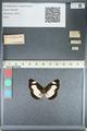 http://mczbase.mcz.harvard.edu/specimen_images/ent-lepidoptera/images/2012_04_23/IMG_117180.JPG