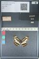http://mczbase.mcz.harvard.edu/specimen_images/ent-lepidoptera/images/2012_04_23/IMG_117287.JPG