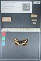 http://mczbase.mcz.harvard.edu/specimen_images/ent-lepidoptera/images/2012_04_23/IMG_117325.JPG