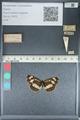 http://mczbase.mcz.harvard.edu/specimen_images/ent-lepidoptera/images/2012_04_23/IMG_117326.JPG