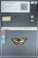 http://mczbase.mcz.harvard.edu/specimen_images/ent-lepidoptera/images/2012_04_23/IMG_117343.JPG
