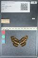 http://mczbase.mcz.harvard.edu/specimen_images/ent-lepidoptera/images/2012_04_24/IMG_117366.JPG