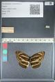 http://mczbase.mcz.harvard.edu/specimen_images/ent-lepidoptera/images/2012_04_24/IMG_117367.JPG