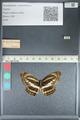 http://mczbase.mcz.harvard.edu/specimen_images/ent-lepidoptera/images/2012_04_24/IMG_117368.JPG