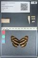 http://mczbase.mcz.harvard.edu/specimen_images/ent-lepidoptera/images/2012_04_24/IMG_117403.JPG