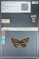 http://mczbase.mcz.harvard.edu/specimen_images/ent-lepidoptera/images/2012_04_24/IMG_117404.JPG