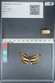 http://mczbase.mcz.harvard.edu/specimen_images/ent-lepidoptera/images/2012_04_25/IMG_117602.JPG