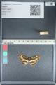 http://mczbase.mcz.harvard.edu/specimen_images/ent-lepidoptera/images/2012_04_25/IMG_117610.JPG