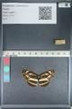 http://mczbase.mcz.harvard.edu/specimen_images/ent-lepidoptera/images/2012_04_25/IMG_117615.JPG