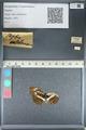http://mczbase.mcz.harvard.edu/specimen_images/ent-lepidoptera/images/2012_04_26/IMG_117660.JPG