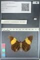 http://mczbase.mcz.harvard.edu/specimen_images/ent-lepidoptera/images/2012_04_27/IMG_117786.JPG