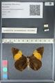 http://mczbase.mcz.harvard.edu/specimen_images/ent-lepidoptera/images/2012_04_27/IMG_117787.JPG