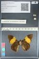 http://mczbase.mcz.harvard.edu/specimen_images/ent-lepidoptera/images/2012_04_27/IMG_117788.JPG