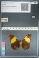 http://mczbase.mcz.harvard.edu/specimen_images/ent-lepidoptera/images/2012_04_27/IMG_117789.JPG