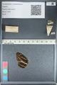 http://mczbase.mcz.harvard.edu/specimen_images/ent-lepidoptera/images/2012_04_28/IMG_117881.JPG